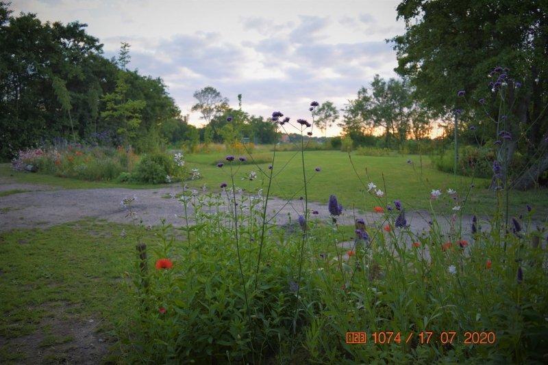 Een foto van een voedselbos