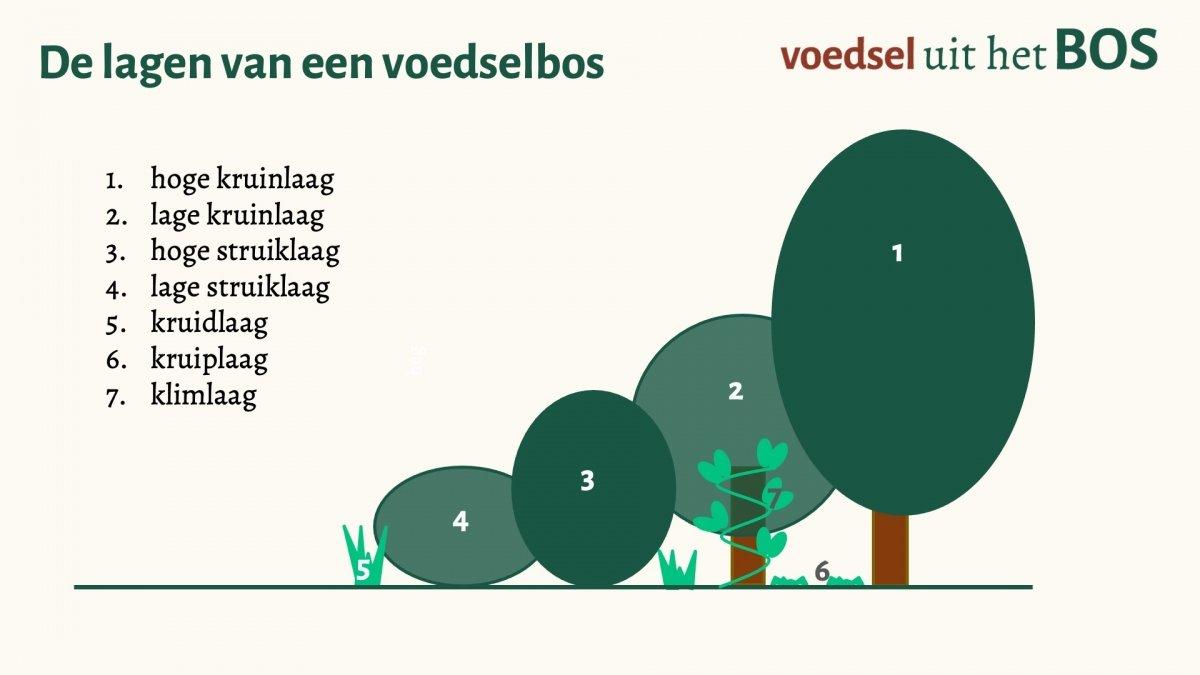 de zeven lagen van een voedselbos